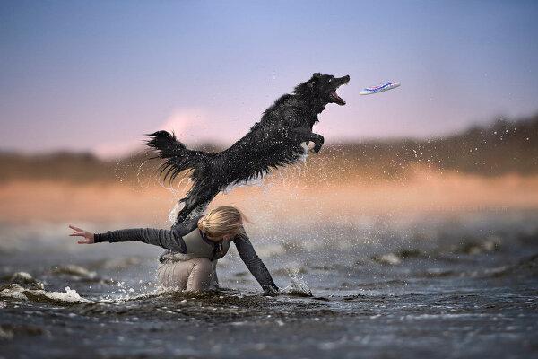 Собаки в фотографиях Клаудио Пикколи