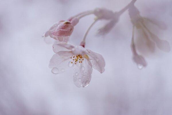 Фотограф Miyako Koumura