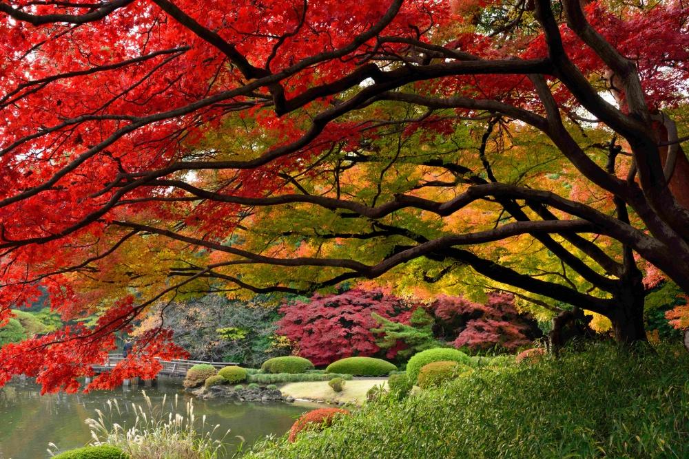 Картинки осенний пейзаж в карандаше