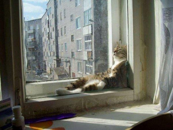 спящие кошки фото
