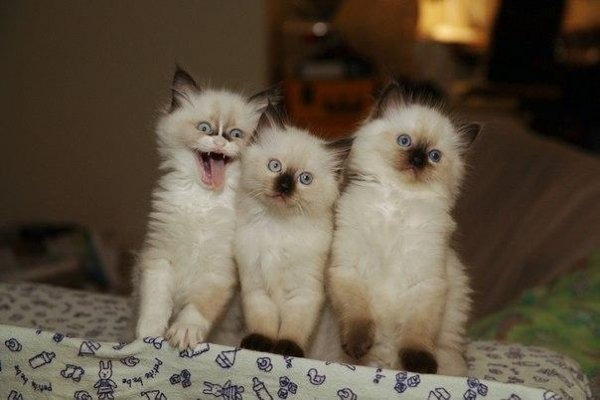 ..Даже у котят есть такой друг, который всегда собой украшает фотографии..!!! ;)