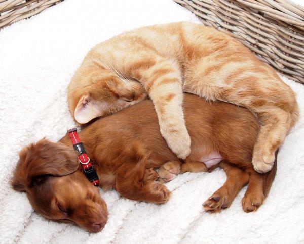 смешные коты и собаки