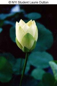 flowerd0304