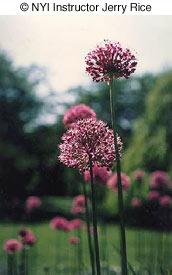 floweri0304