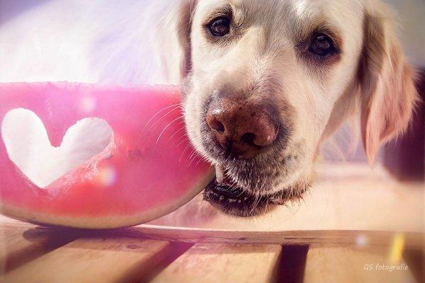 .. Как и люди — собаки тоже умеют любить, а главное - дружить..!!! :) - №14