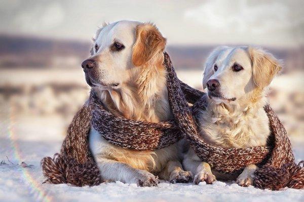 .. Как и люди — собаки тоже умеют любить, а главное - дружить..!!! :) - №10