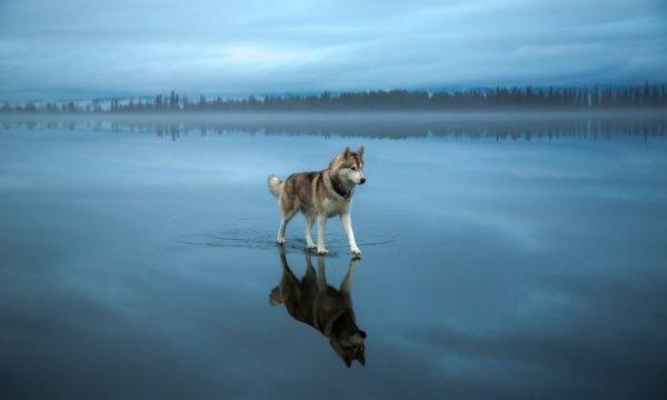 © Fox Grom - Фотографии без фотошопа