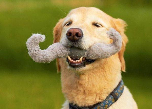 смотреть собаки игрушки