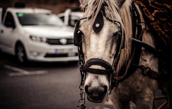 sergey - Такси (http://fotokto.ru/id134021)