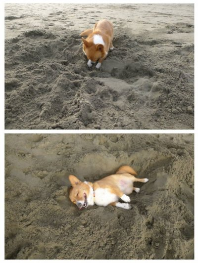 Фотографии собак