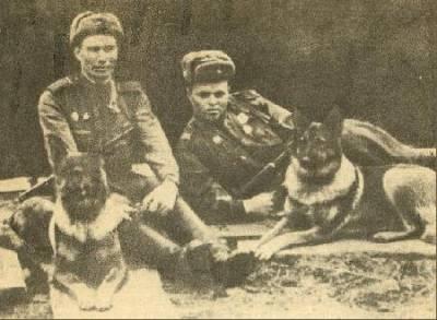 Первая в Красной Армии собака-диверсант Дина.(1)