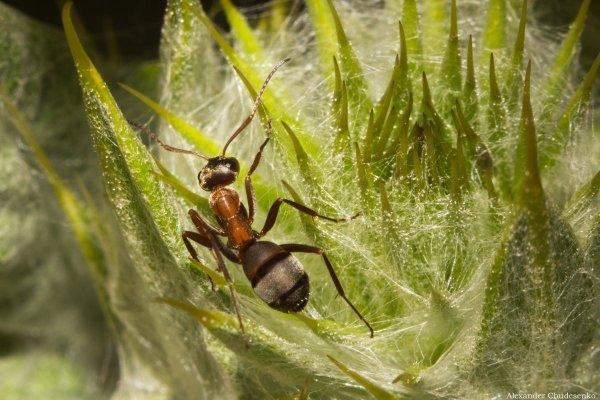 насекомые в макро