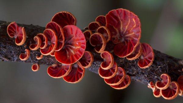 разные виды грибов на фото 10