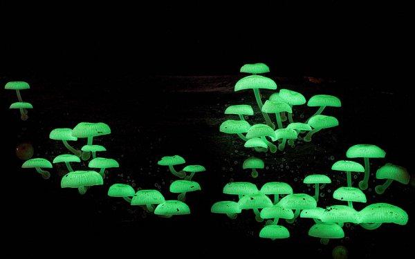 разные виды грибов на фото 14