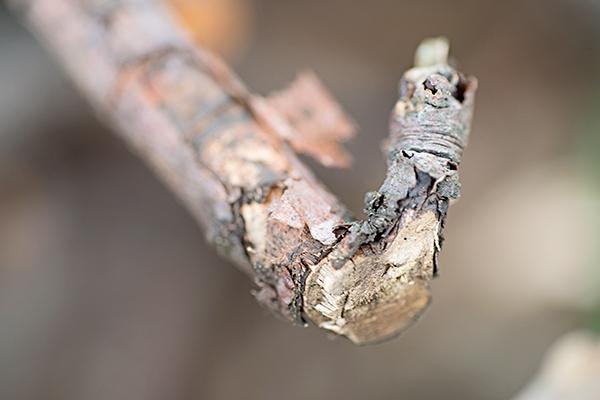 Макросъемка природы и предметов в вашем дворе. Текстура коры. Фото: Мари Гардинер