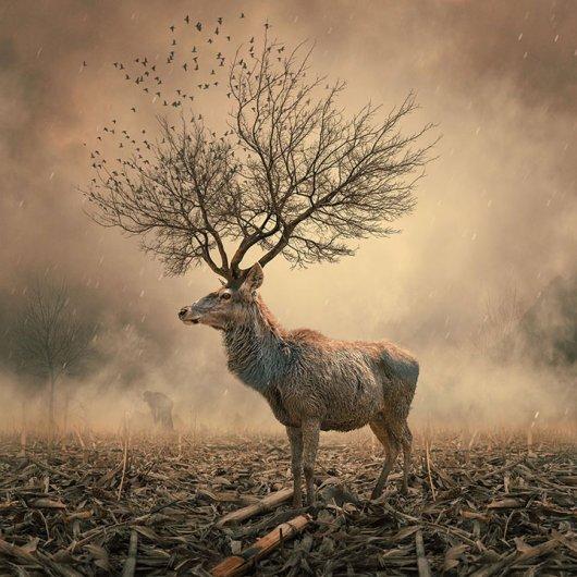 Фотомонтаж про живую природу
