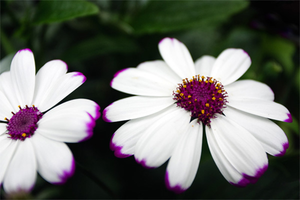 Фильтр в Фотошопе, 2