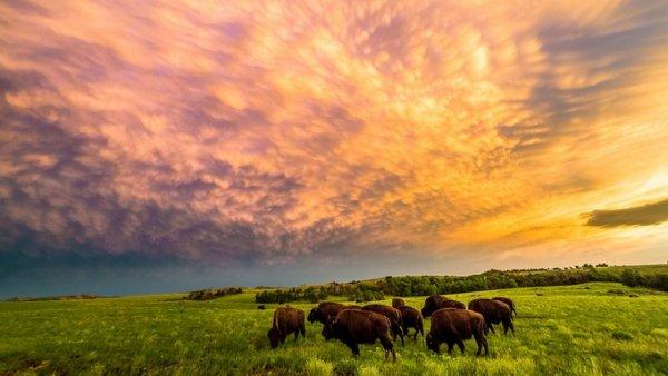 цветные пейзажи 7