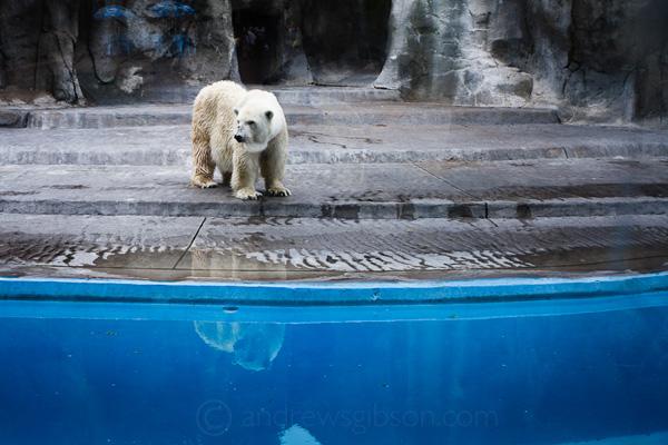 Фото животных из зоопарка в естественной среде