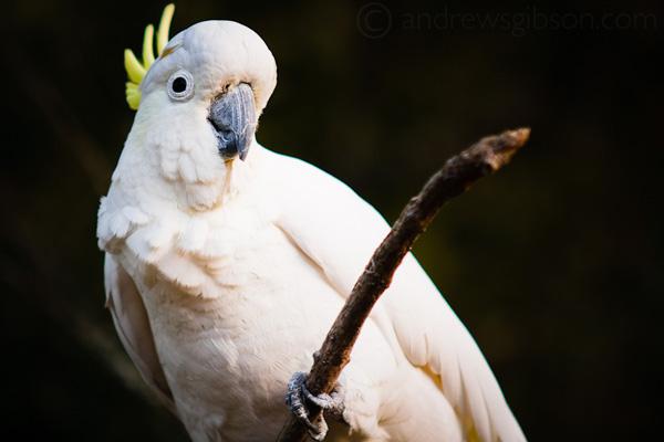 смотреть фото животных из зоопарка – попугаи