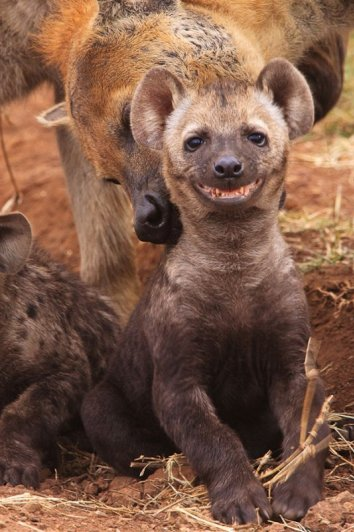 счастливые животные на фото 13