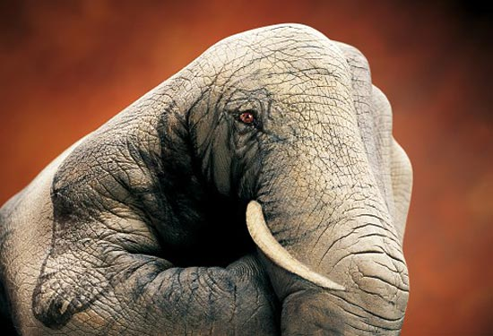 Фото животных из рук 16