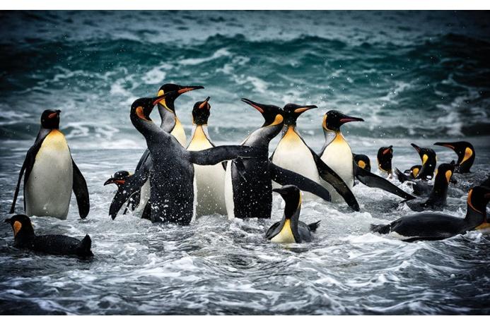 Фото Антарктиды 8 – Фотограф Алекс Бернаскони