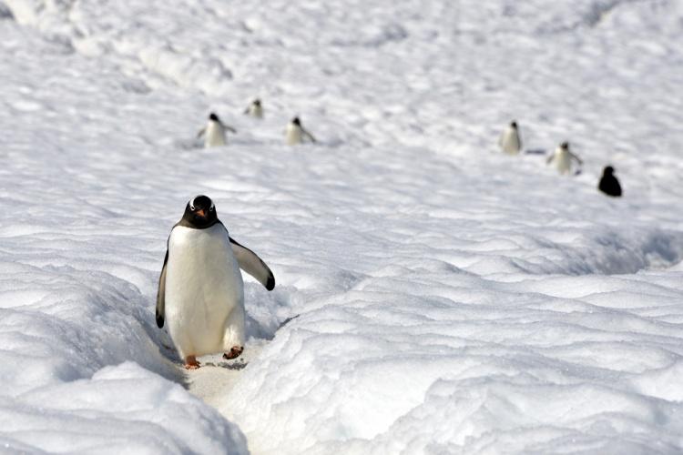 Фото Антарктиды 20