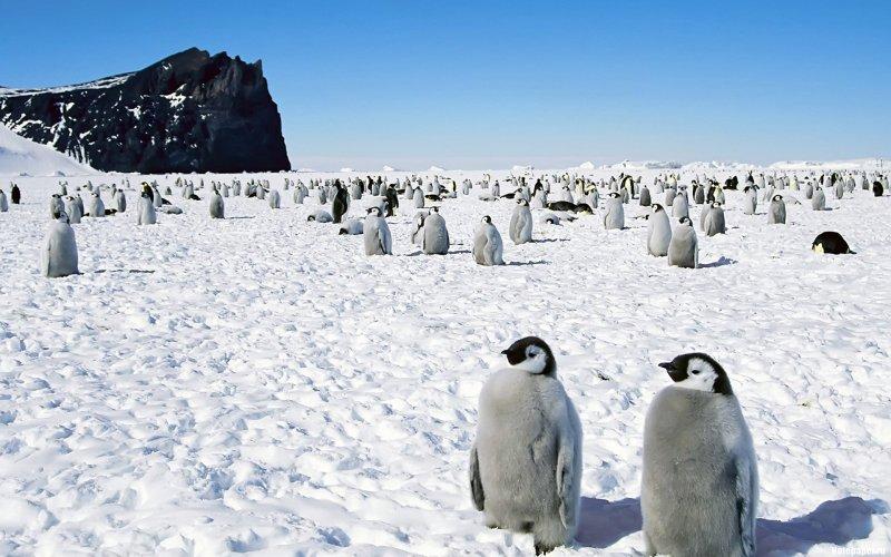 Фото Антарктиды 24