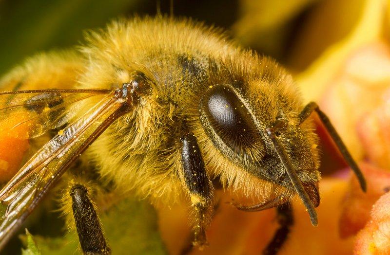 Вячеслав Мишин – фото насекомых