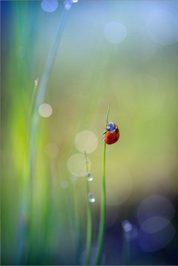 Александр Чорный – фото насекомых