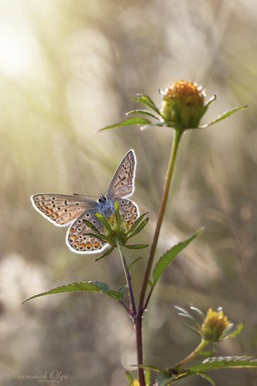 Olga Verenich – фото насекомых
