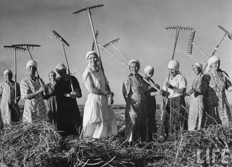 СССР, август 1941 года, женщины убирают сено. Фото Маргарет Бурк-Уайт