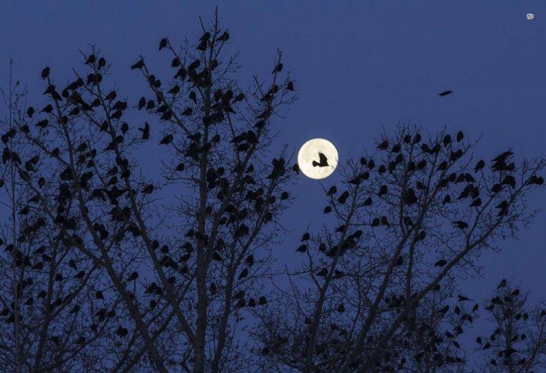 Фотограф: Шамиль Жуматов — фото Полнолуния 27