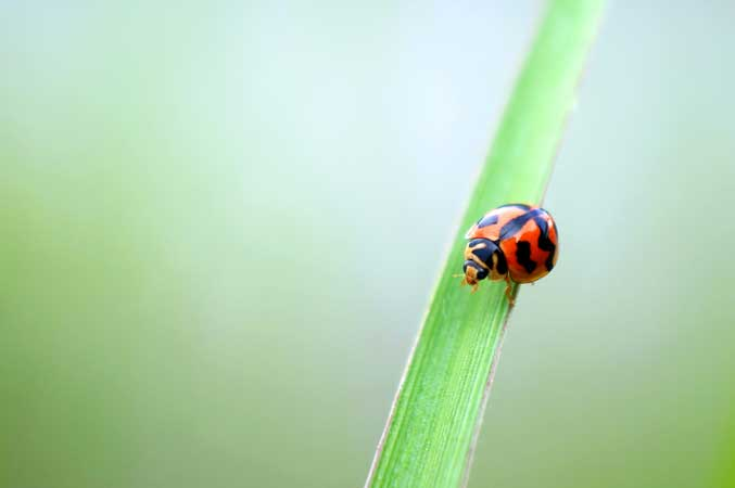 photo-fact-friday-insect-issues