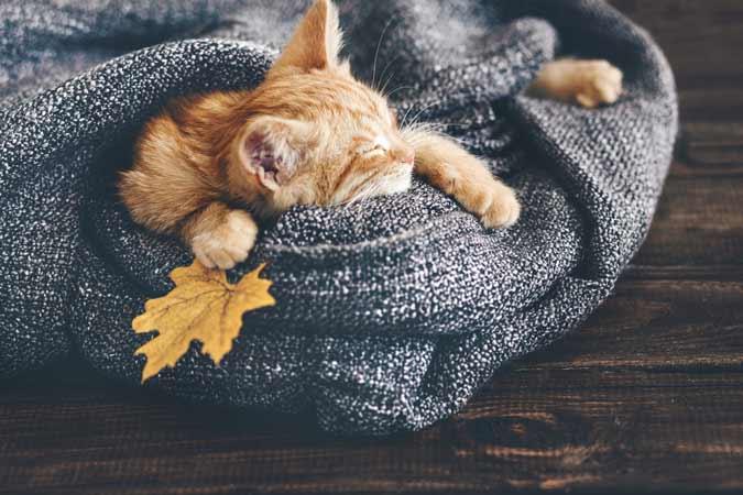 photo-fact-kitty-close-ups