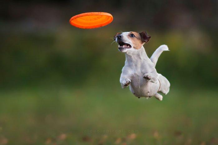 Летающие собаки Клаудио Пикколи - №6