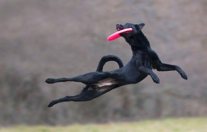 Летающие собаки Клаудио Пикколи - №7