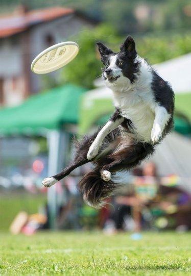 Летающие собаки Клаудио Пикколи - №16