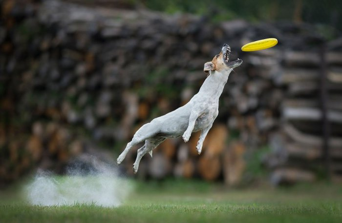 Летающие собаки Клаудио Пикколи - №4