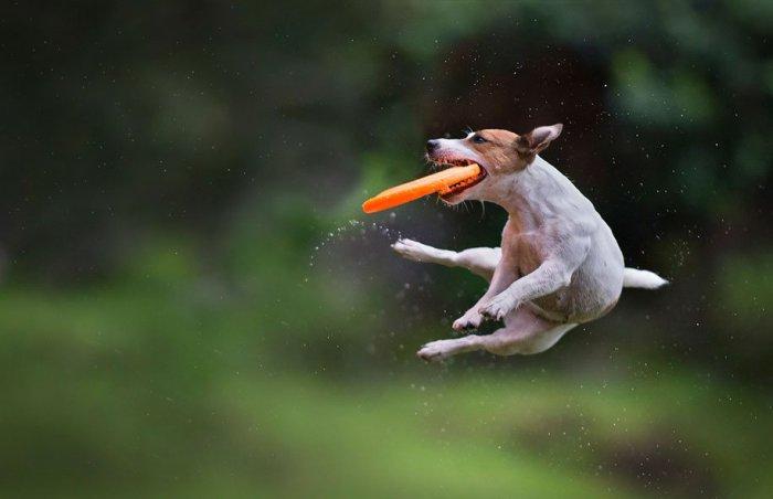Летающие собаки Клаудио Пикколи - №2