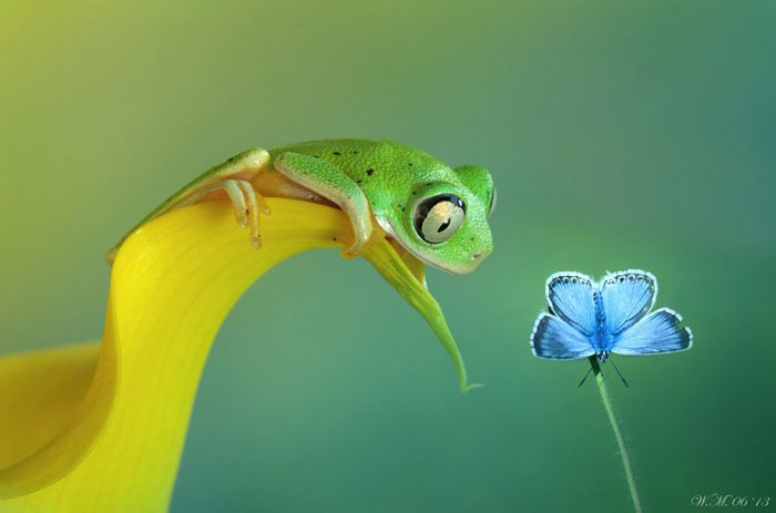 Заманчивый мир лягушек в макрофотографии Уила Мийера - №3