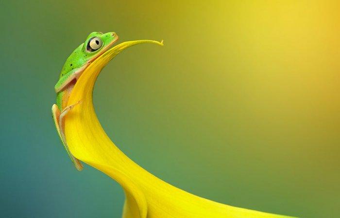Заманчивый мир лягушек в макрофотографии Уила Мийера - №10