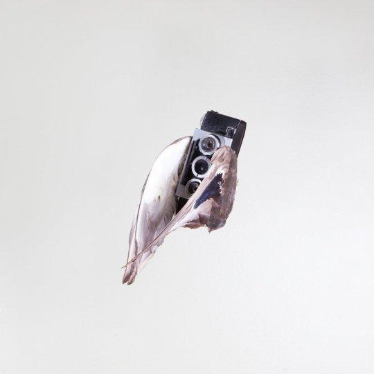 Летающие птицы-фотокамеры Пола Октавиуса - №1