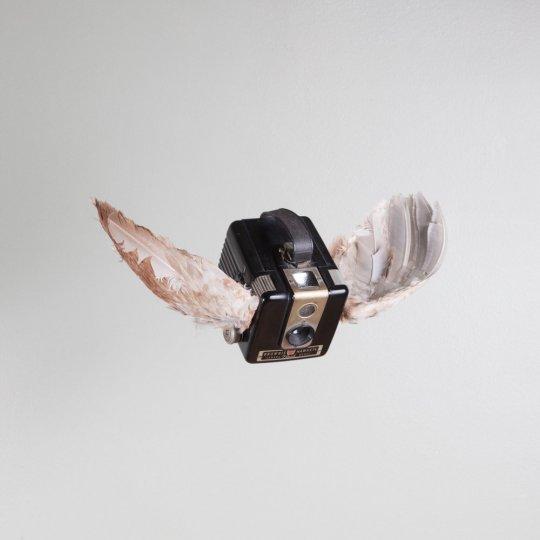 Летающие птицы-фотокамеры Пола Октавиуса - №4