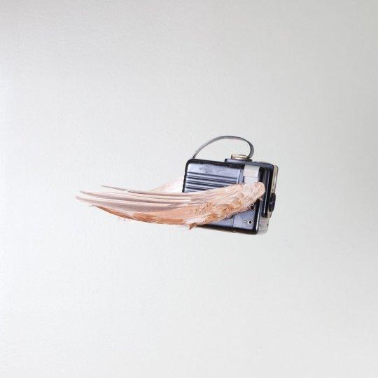 Летающие птицы-фотокамеры Пола Октавиуса - №8