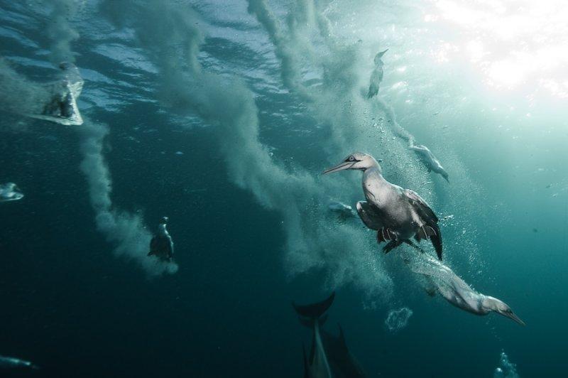Потрясающие подводные фотографии Александра Сафонова - №11