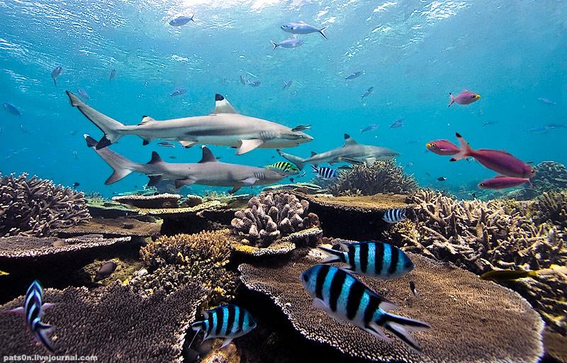 Потрясающие подводные фотографии Александра Сафонова - №1