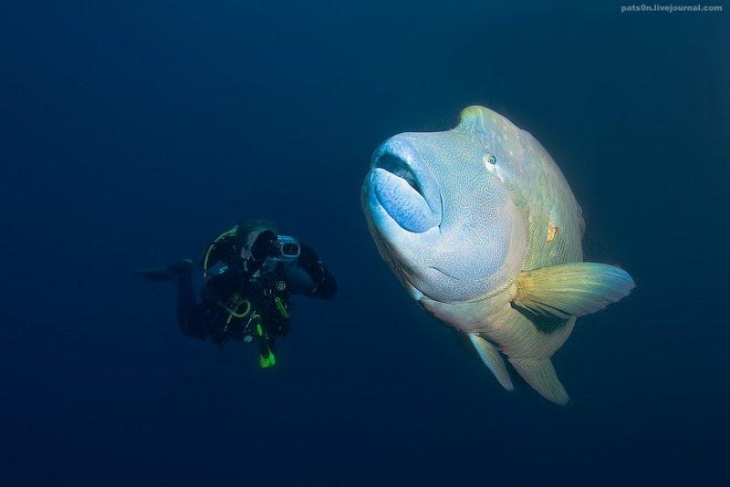 Потрясающие подводные фотографии Александра Сафонова - №5