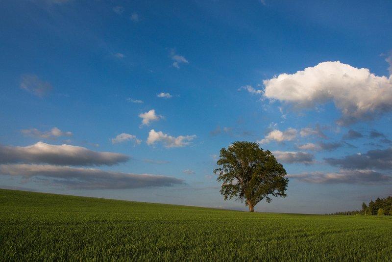 Ландшафтная сказка в фотографиях Кента Шираиши - №11